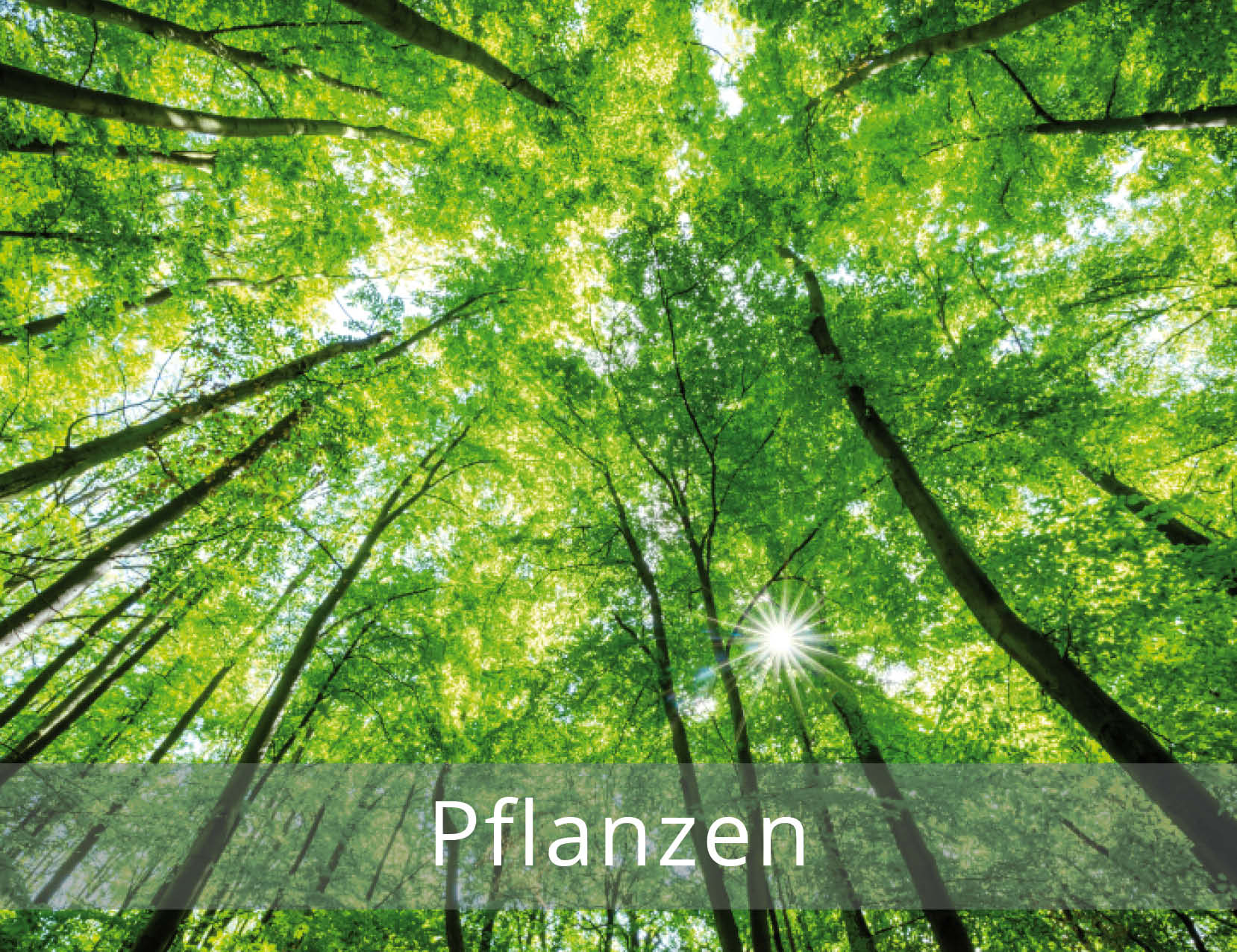 thetahealing-Pflanzen